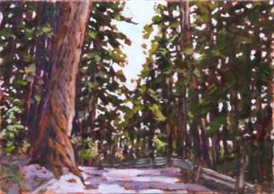apathwoods